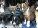 1 апреля 2012 года в Первоуральске общество защиты животных приглашает горожан на ставшую уже традиционной акцию «Ищу тебя, Хозяин»