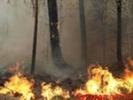 Пожар в Природном парке был потушен за 3,5 часа