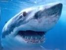 Власти Египта выпустили предупреждение об опасности появления акул у берегов Шарм-эш-Шейха