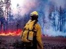Площадь природных пожаров в России увеличилась на четверть