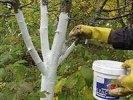 В Первоуральске ПМКУ «Городское хозяйство» белят деревья и косят траву