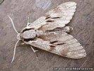 В Первоуральске зафиксировано аномальное нашествие мух и бабочек