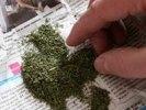 За хранение 44 кг марихуаны житель Хабаровского края приговорен к штрафу и условному сроку