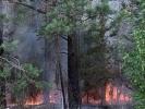 Из-за брошенного окурка загорелся лес под Первоуральском