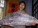 Китайский рыбак выловил редкую рыбу стоимостью $473 тысячи