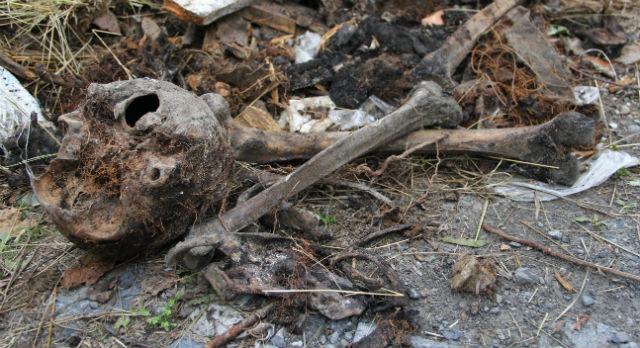 На городском кладбище Первоуральска в куче мусора нашли человеческие кости